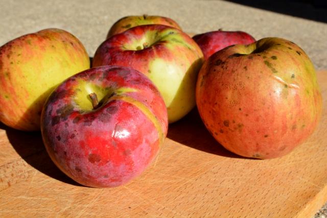 organic-apple-1