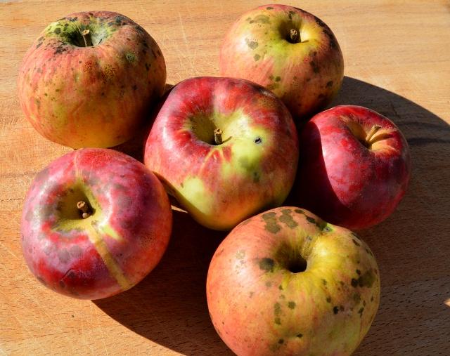 organic-apple-2