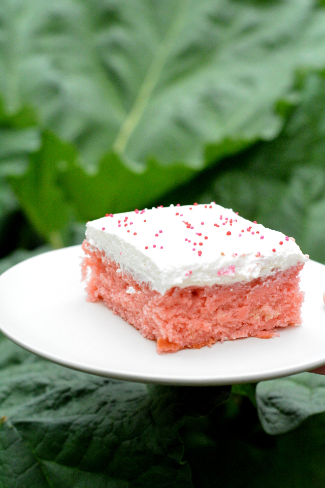 rhubarb cake by lush rhubarb leaves